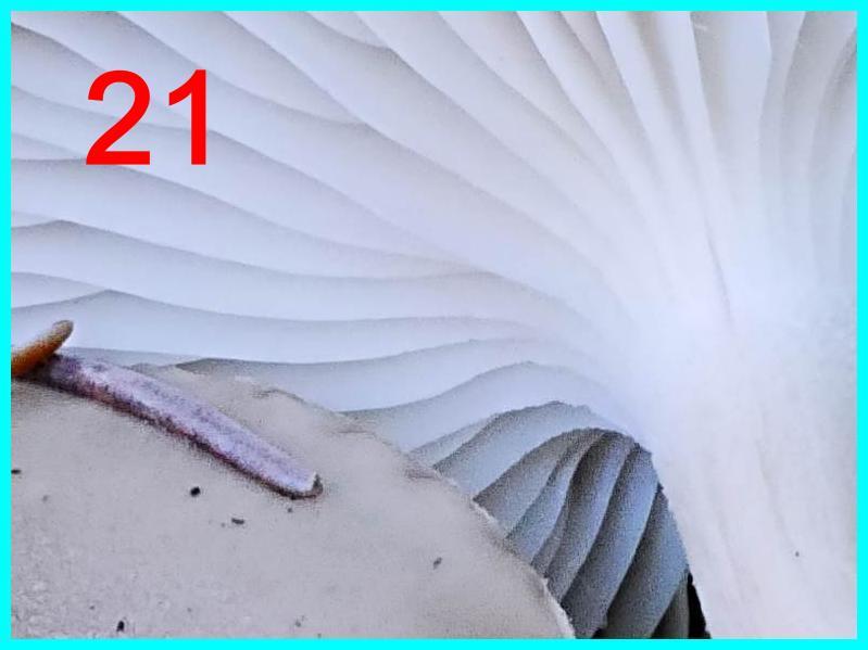 250321-1-r%C3%A4tsel-jpg