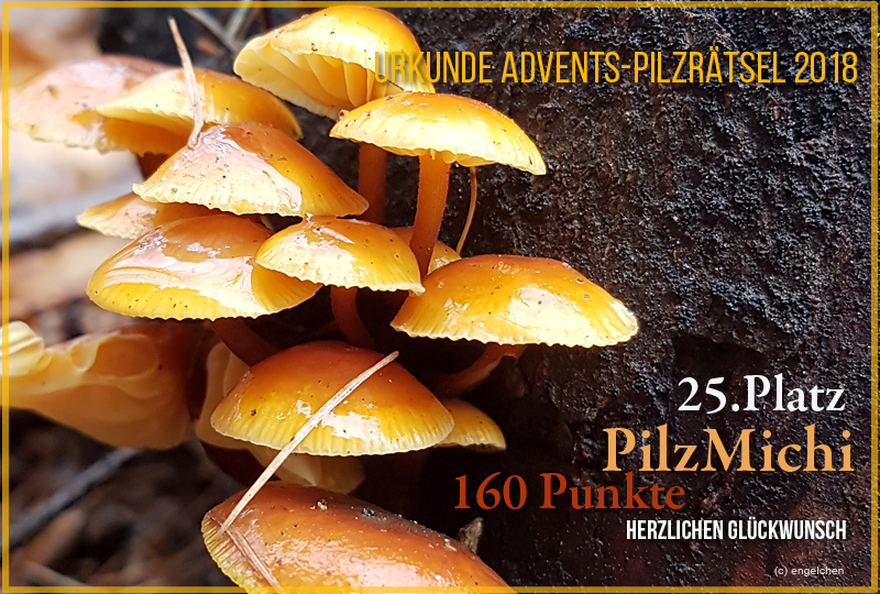 251335-2018-25-pilzmichi-jpg