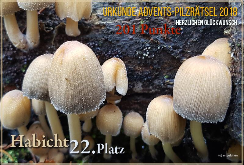 251425-2018-22-habicht-jpg