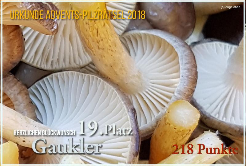 251669-2018-19-gaukler-jpg