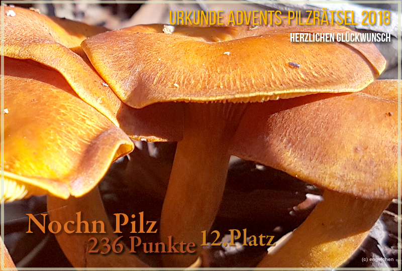 251934-2018-12-nochnpilz-jpg