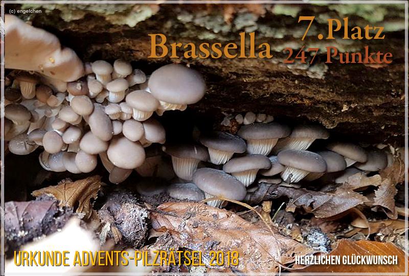 252091-2018-7-brassella-jpg