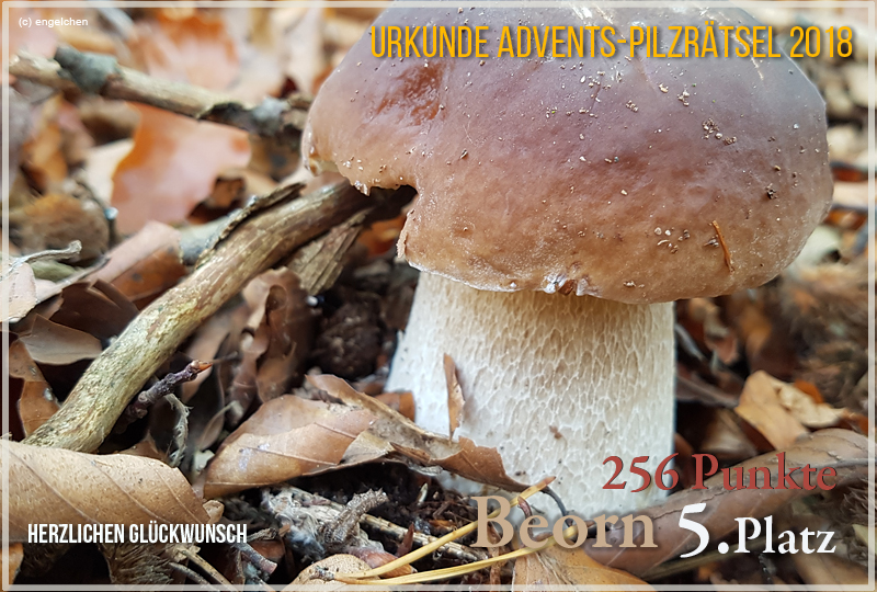 252241-2018-5-beorn-jpg