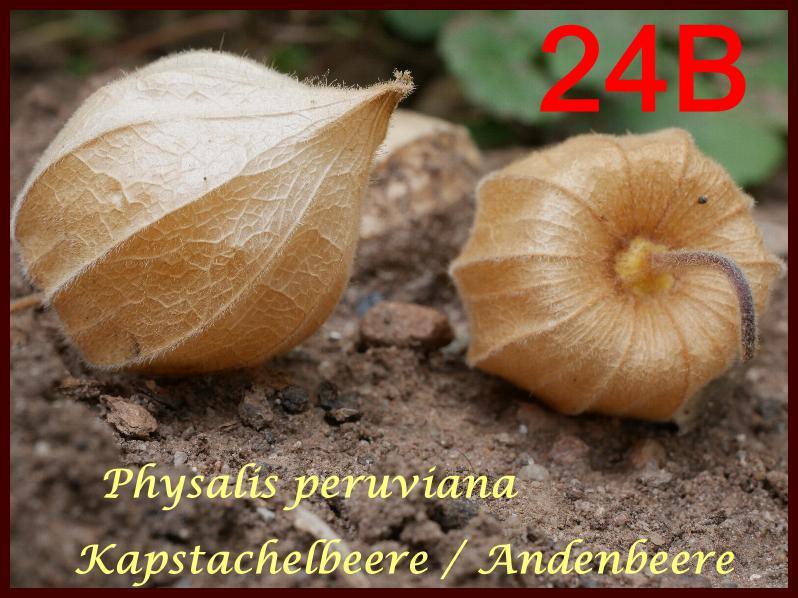 252246-3-l%C3%B6sung-jpg