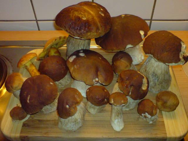 pilze sammeln nrw karte Pilze suche in NRW   Hot Spots   Pilzforum.eu
