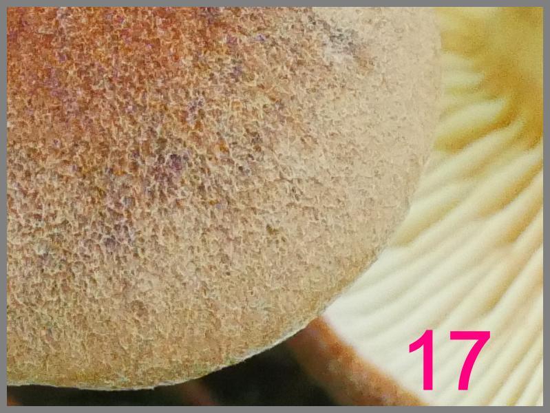 298166-1-r%C3%A4tsel-jpg