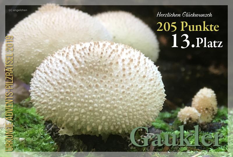 301181-13-205-gaukler-jpg