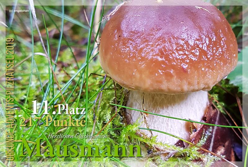 301250-11-217-mausmann-jpg
