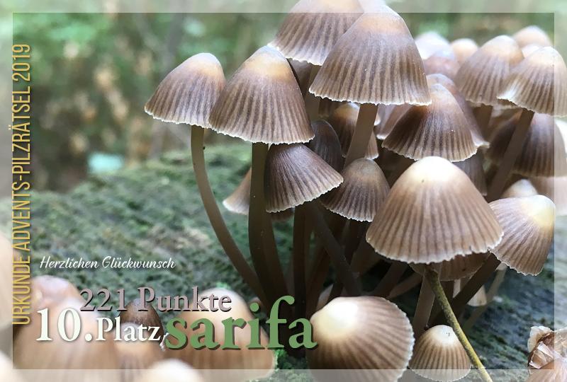 301313-10-221-sarifa-jpg