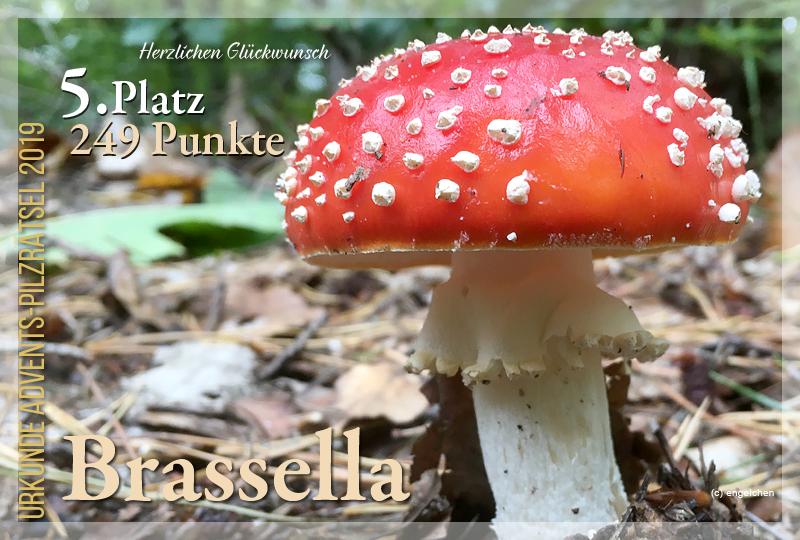 301478-5-249-brassella-jpg