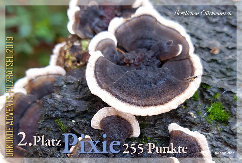 301524-2-255-pixie-jpg