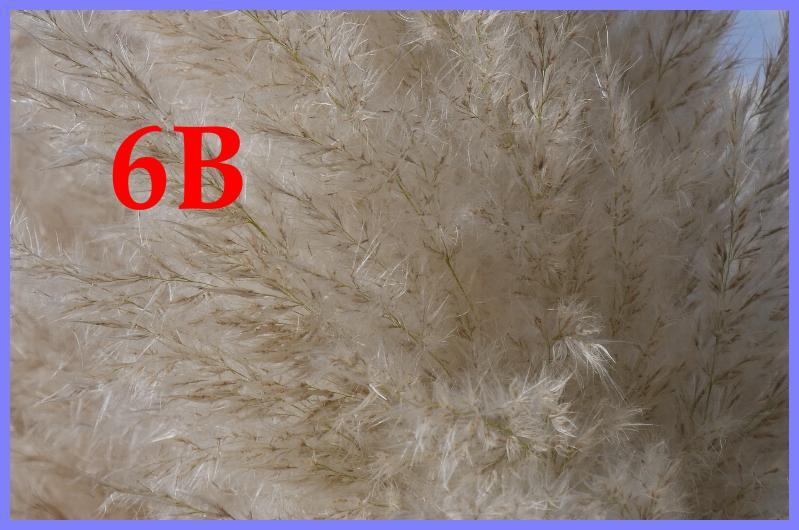355833-6b-jpg