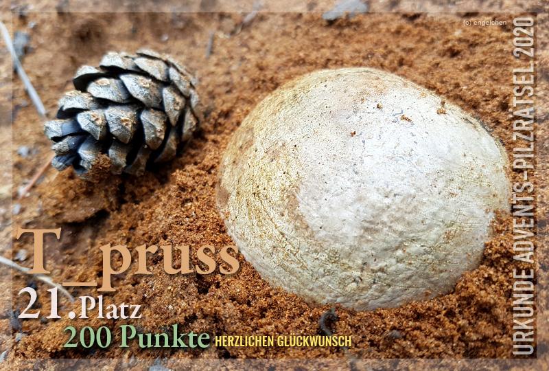 360041-21-200-t-pruss-jpg