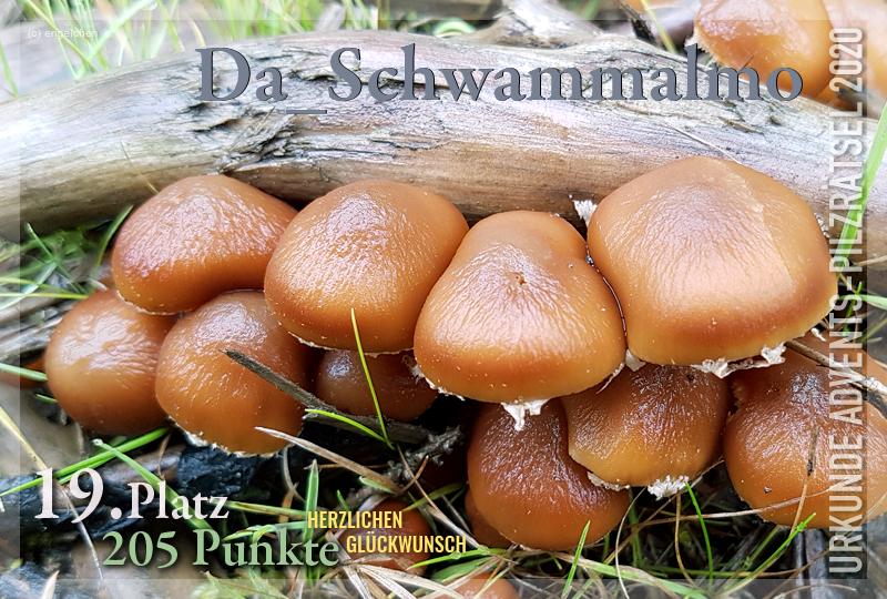 360117-19-205-schwammalmo-jpg