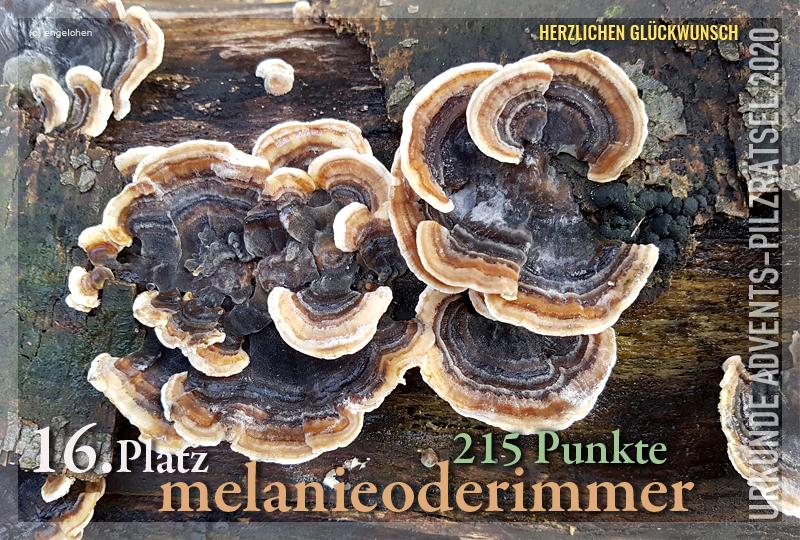360252-16-215-melanieoderimmer-jpg