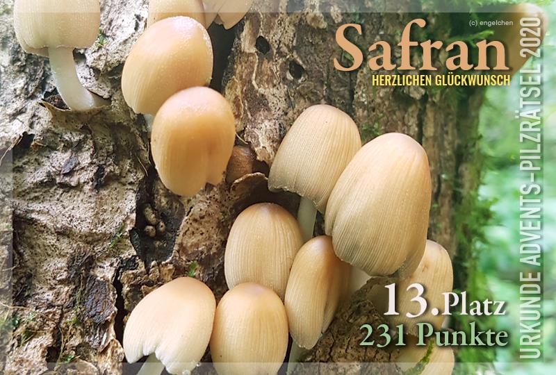 360307-13-231-safran-jpg