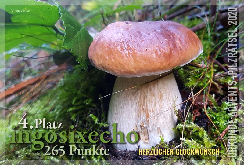 360866-04-265-ingosixecheo-jpg