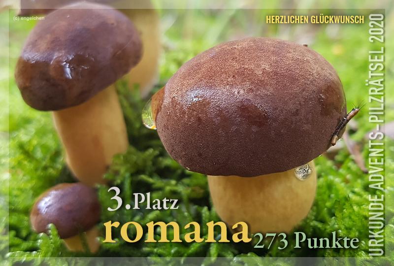 360868-03-273-romana-jpg